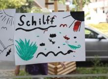 Schilff